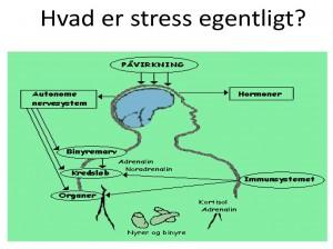 hvad gør stress ved kroppen