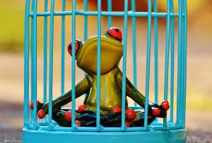 Kirsten-K hjælper fri for angst og ud af buret